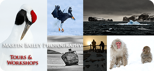 Martin Bailey Photography Tours and Workshops
