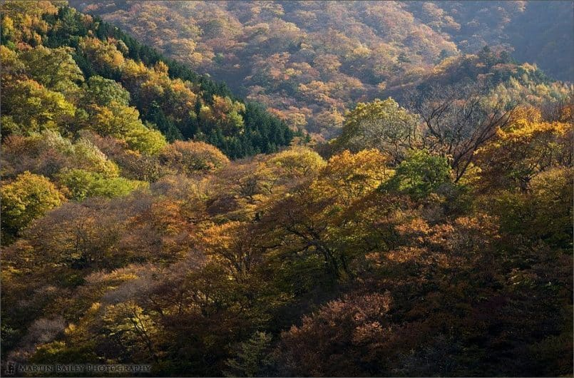 Irohazaka Autumn Splendour