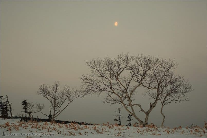 Moon and Tree from Bihoro Pass