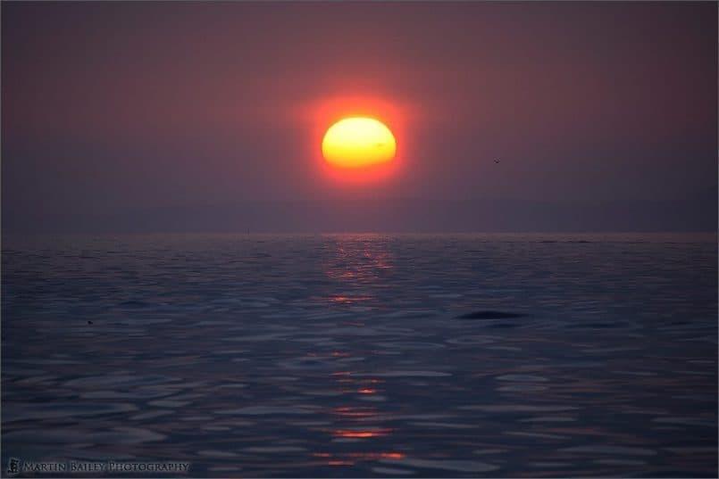 Okhotsk Sunrise