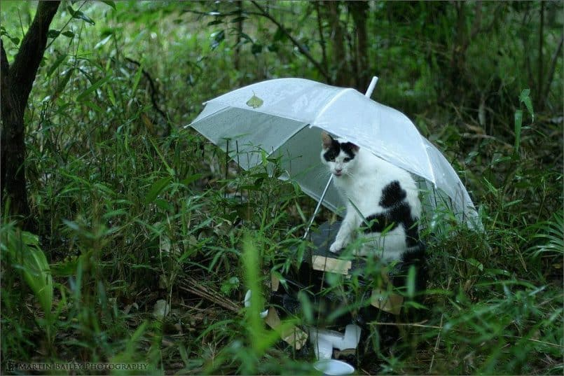 Cat Under Umbrella