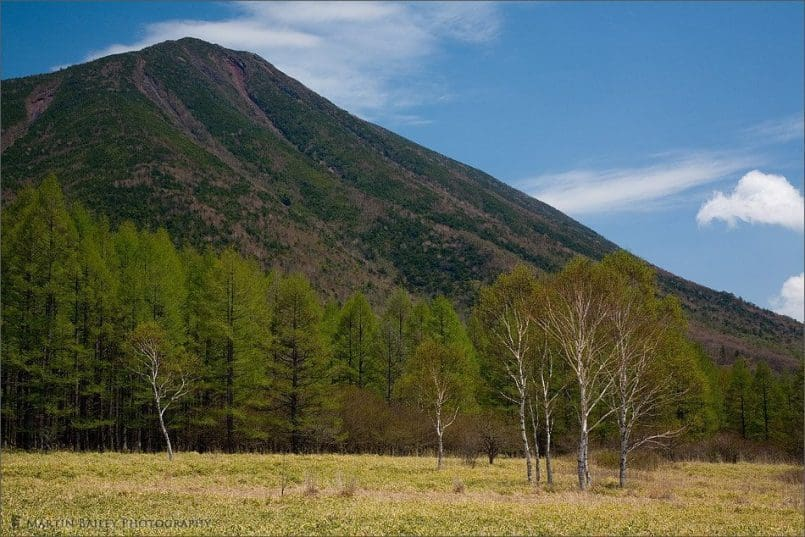 Mount Nantai with Silver Birch