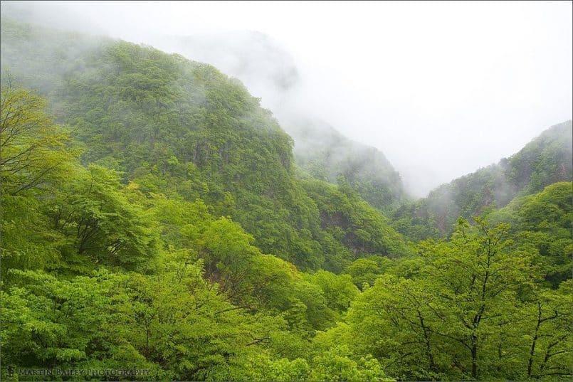 Misty Spring Mountain