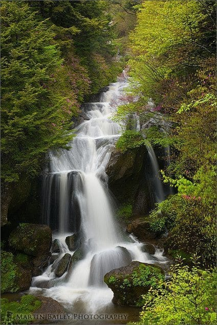 Ryuuzu Falls (Right) with Azalea