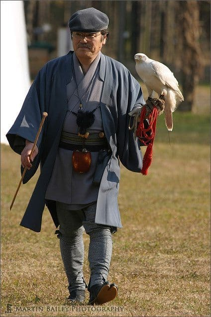 Falconer (White Falcon)