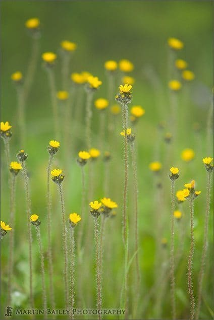 Long Yellow Flowers