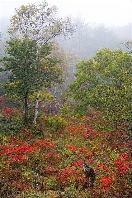 Ichinuma Autumn #1