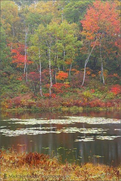 Ichinuma Autumn #2