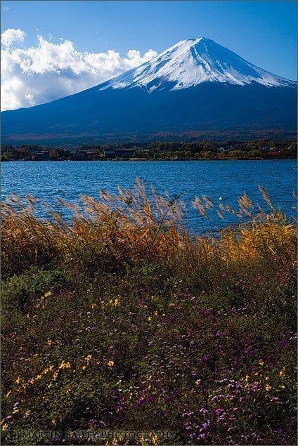 Fuji & Flowers