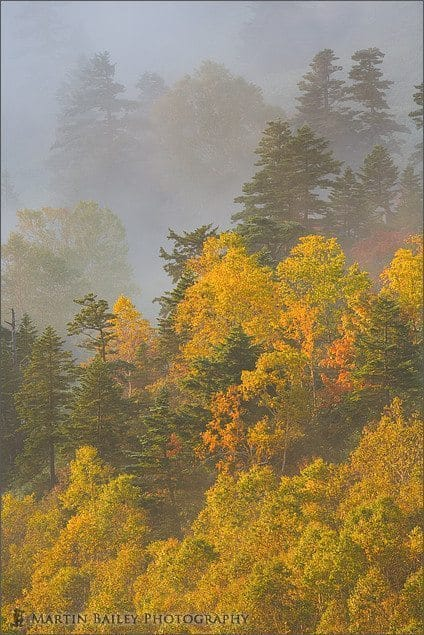Trees in the Mist #2