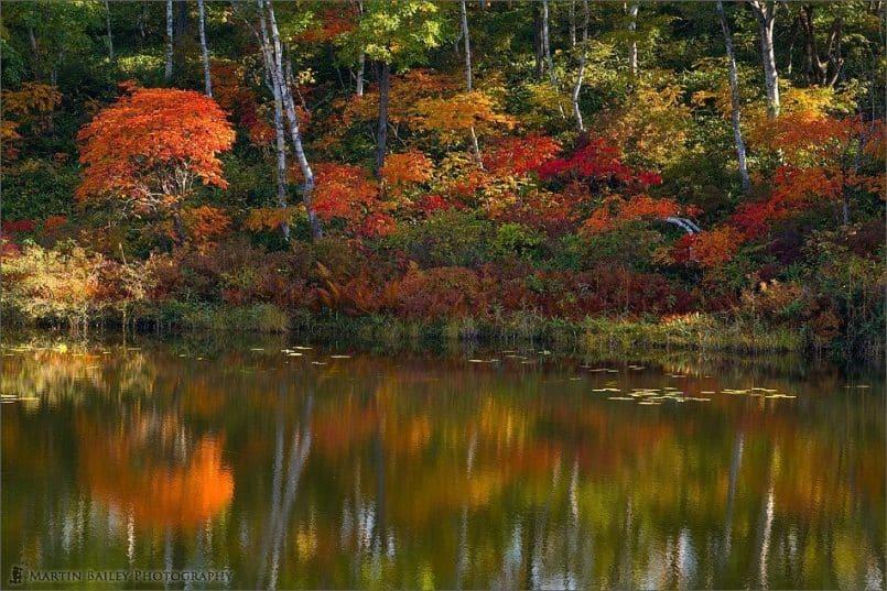 Ichinuma (Pond) 2007 #3