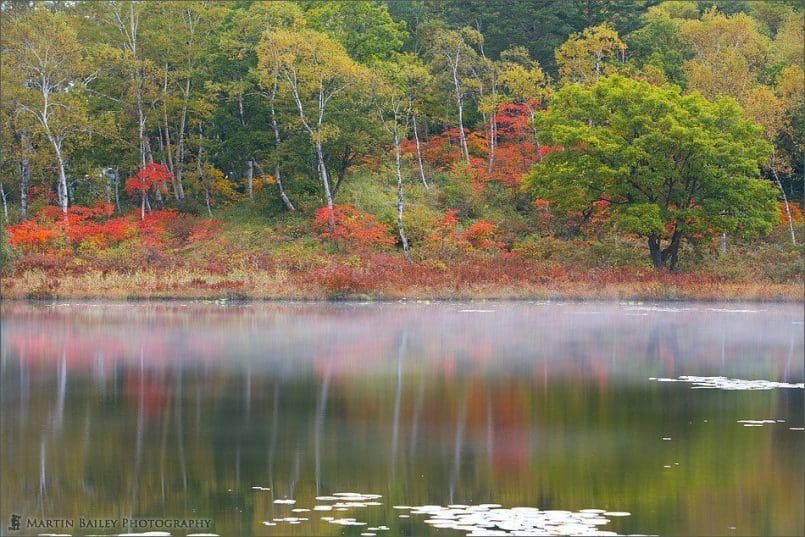 Ichinuma (Pond) 2007 #5