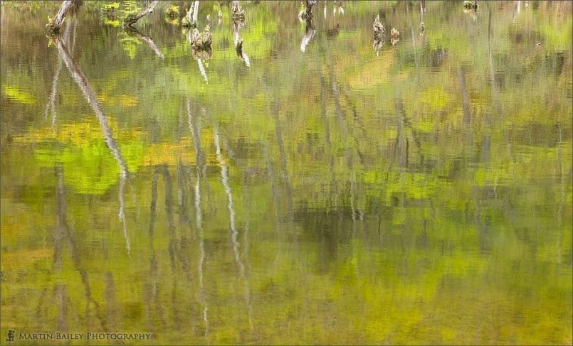 Early Summer Reflections #1