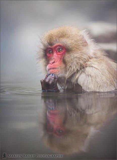Macaque #5