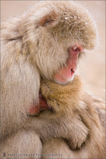 Mother & Child - Macaque #17