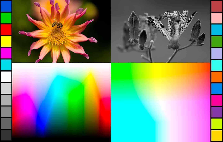 Martin Bailey Inkjet Print Test Image