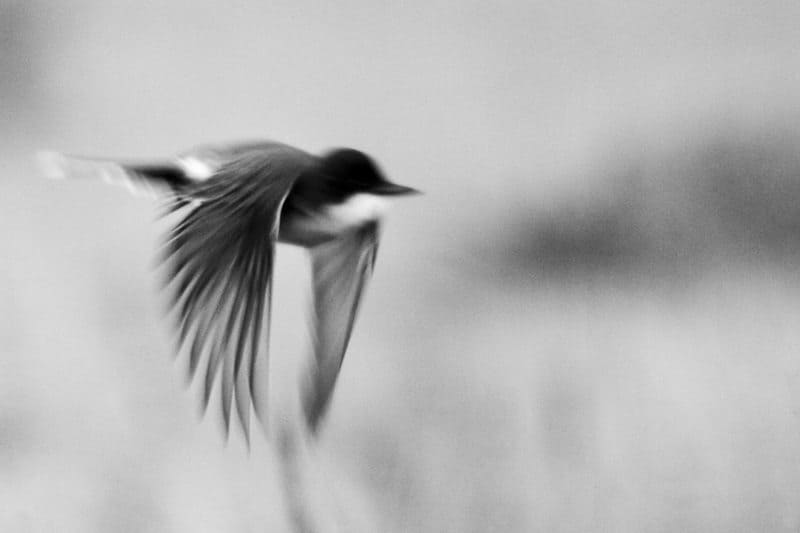 """A Blurred"" by Craig Halp"