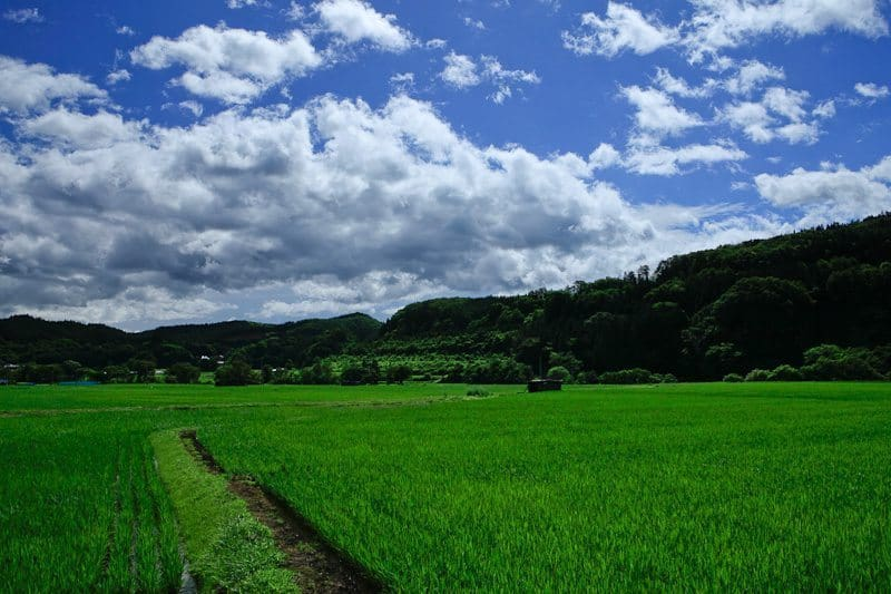 Shot of Rice Fields in Joboji (Picture Style: Landscape - Baked in!)