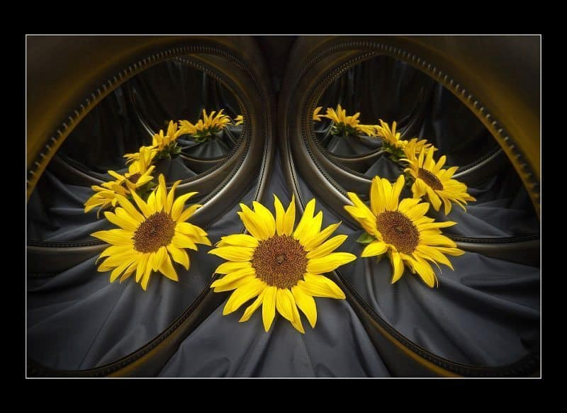 """Sunflower Illusionist"" © Allen ONeal"
