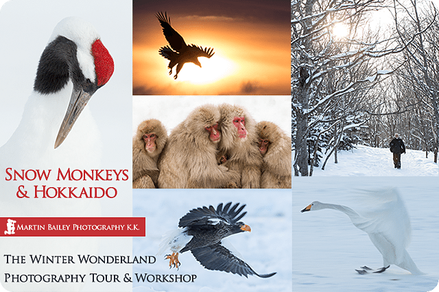 Snow Monkeys and Hokkaido Winter Wonderland Tour/Workshop