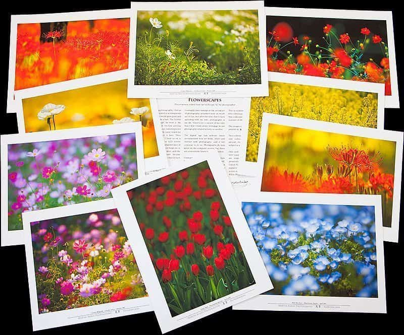 Flowerscapes Folio Prints