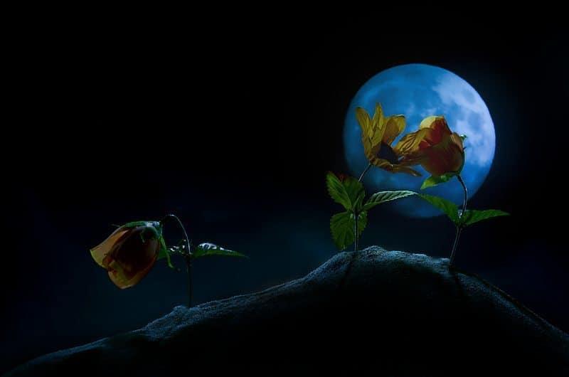 Under the Moonlight (© Dan Newcomb)