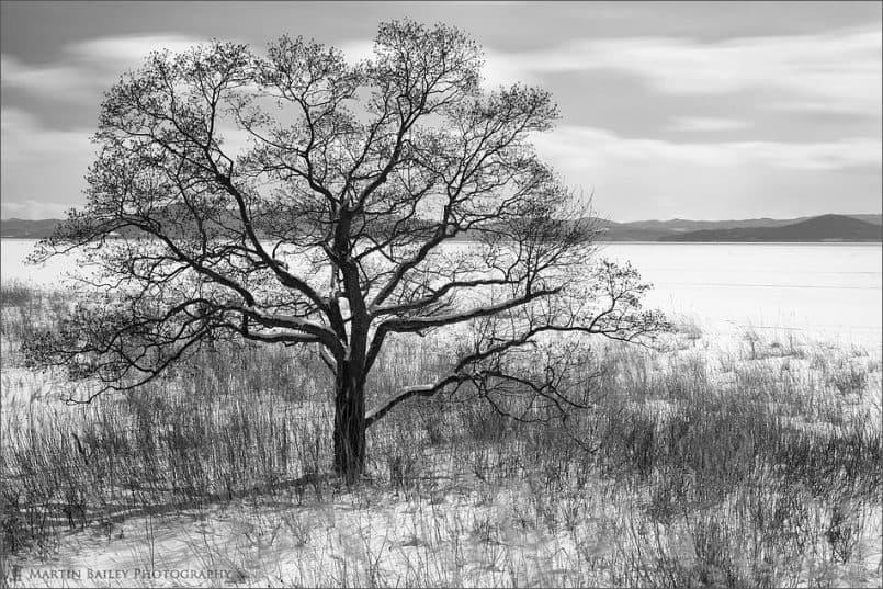 Saroma Lake Tree
