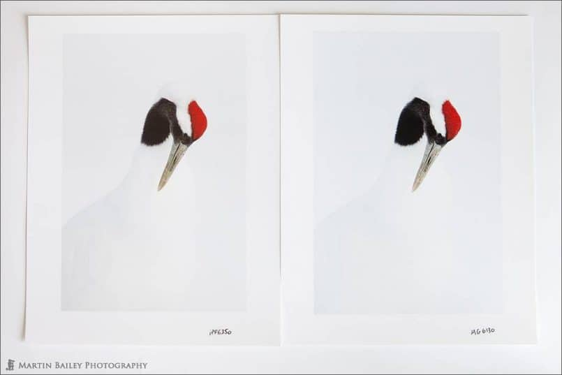 Red Crowned Crane Examples