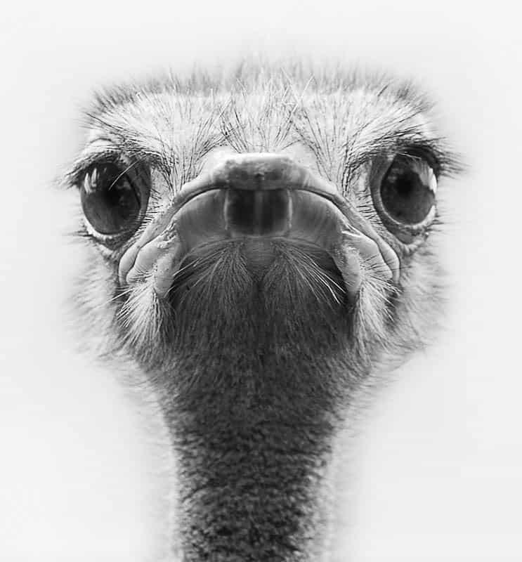Ostrich Eyes © Leslie Granda-Hill