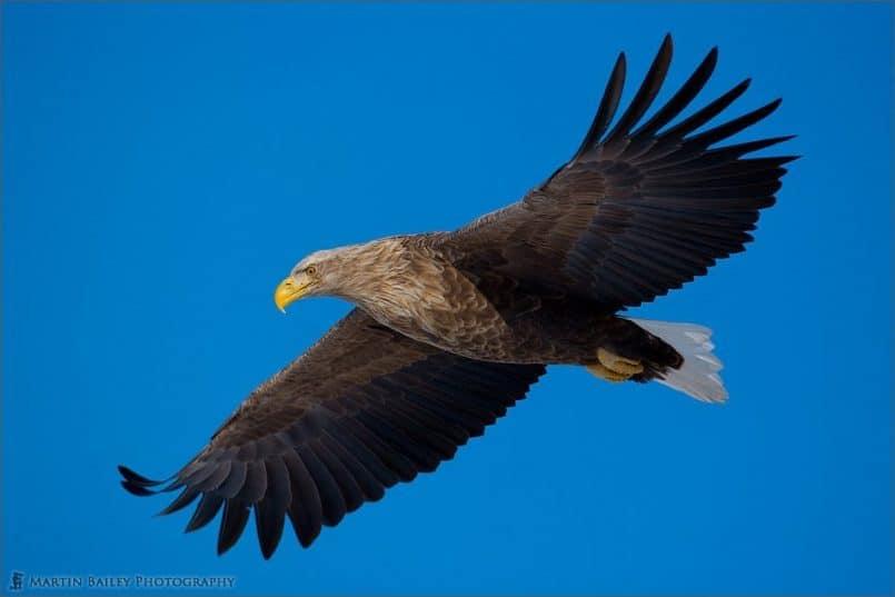 Eagle Eye (with ColorChecker Profile)