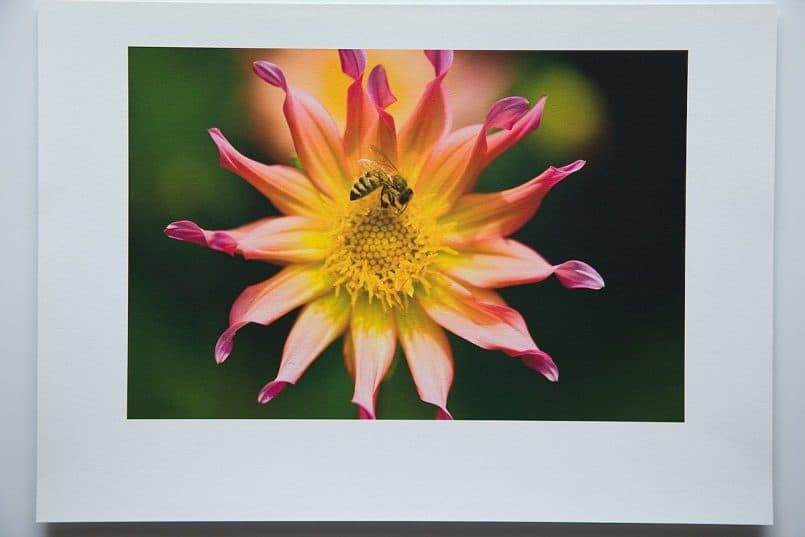 #3a Canon Fine Art Photo Rag paper printed with the Canon Photo Rag profile. Rendering Intent: Relative