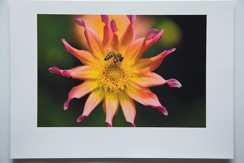 #3b Canon Fine Art Photo Rag paper printed with the Hahnemuhle Rag profile. Rendering Intent: Relative