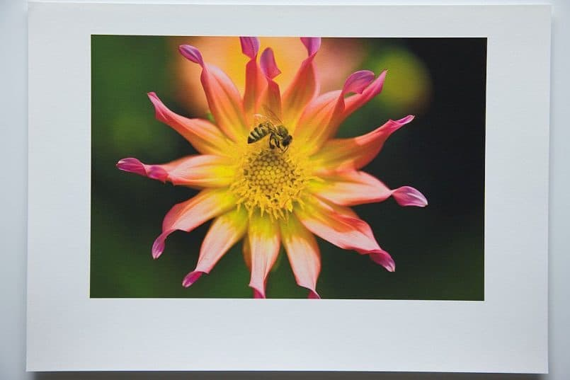 #3c Canon Fine Art Photo Rag paper printed with the Hahnemuhle Rag profile. Rendering Intent: Perceptual