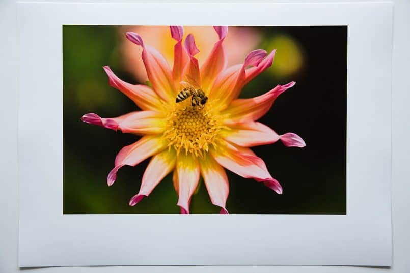 #3d Canon Semi-Gloss Photo paper printed with the Canon profile. Rendering Intent: Perceptual
