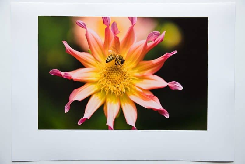 #3e Canon Gloss Photo paper printed with the Canon profile. Rendering Intent: Perceptual