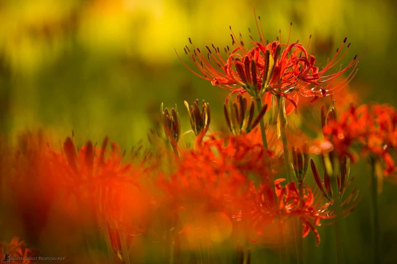 Flowerscapes