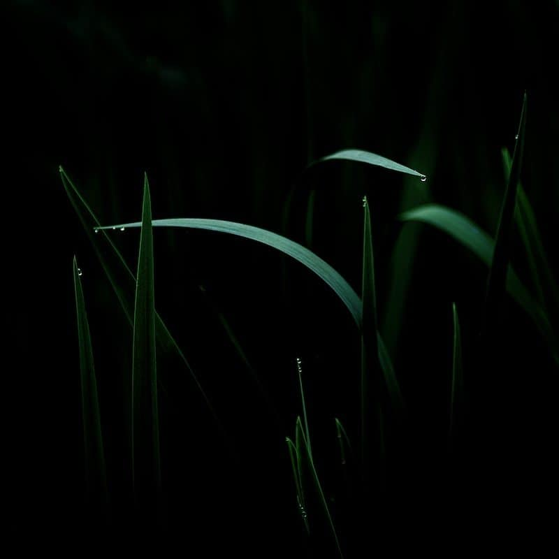 """Snakes in grass"" © Wythe Whiting"