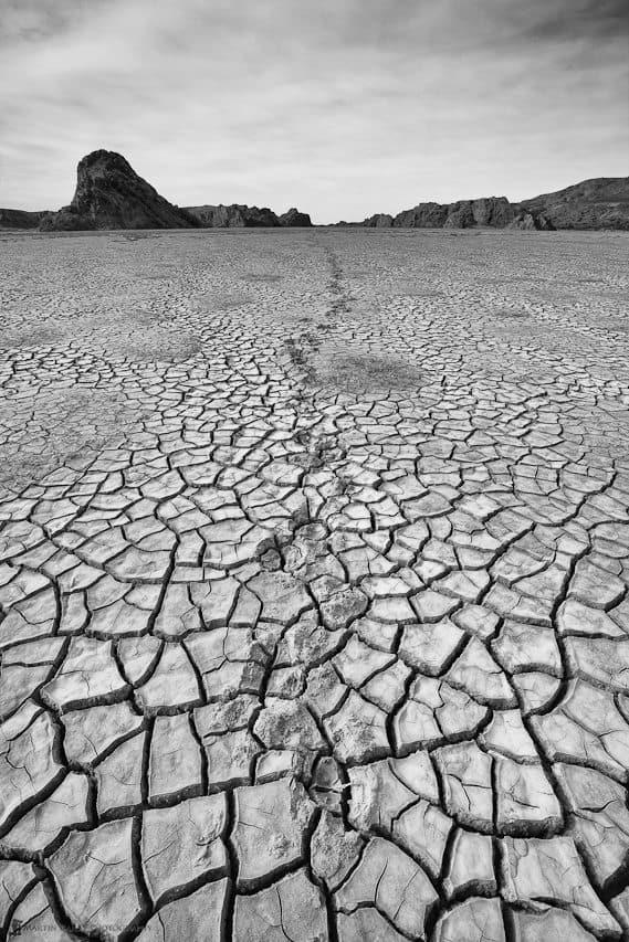 Guanaco Footprints