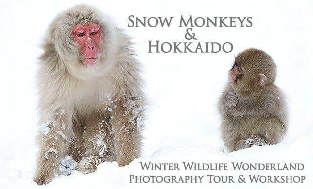 Snow Monkeys & Hokkaido Tour and Workshop