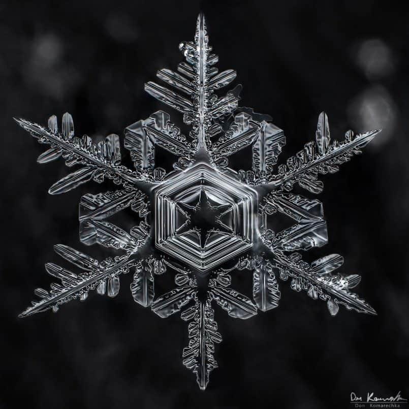 Snowflake - Don Komarechka