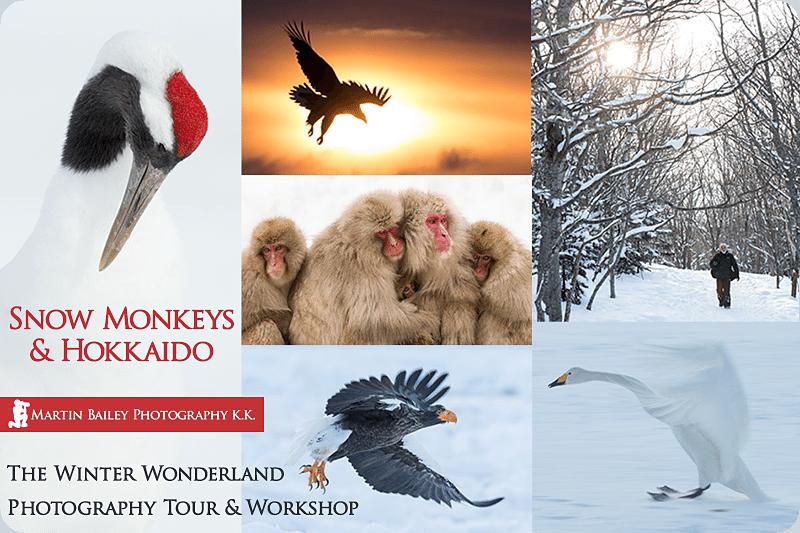 Snow Monkey & Hokkaido Tours & Workshops