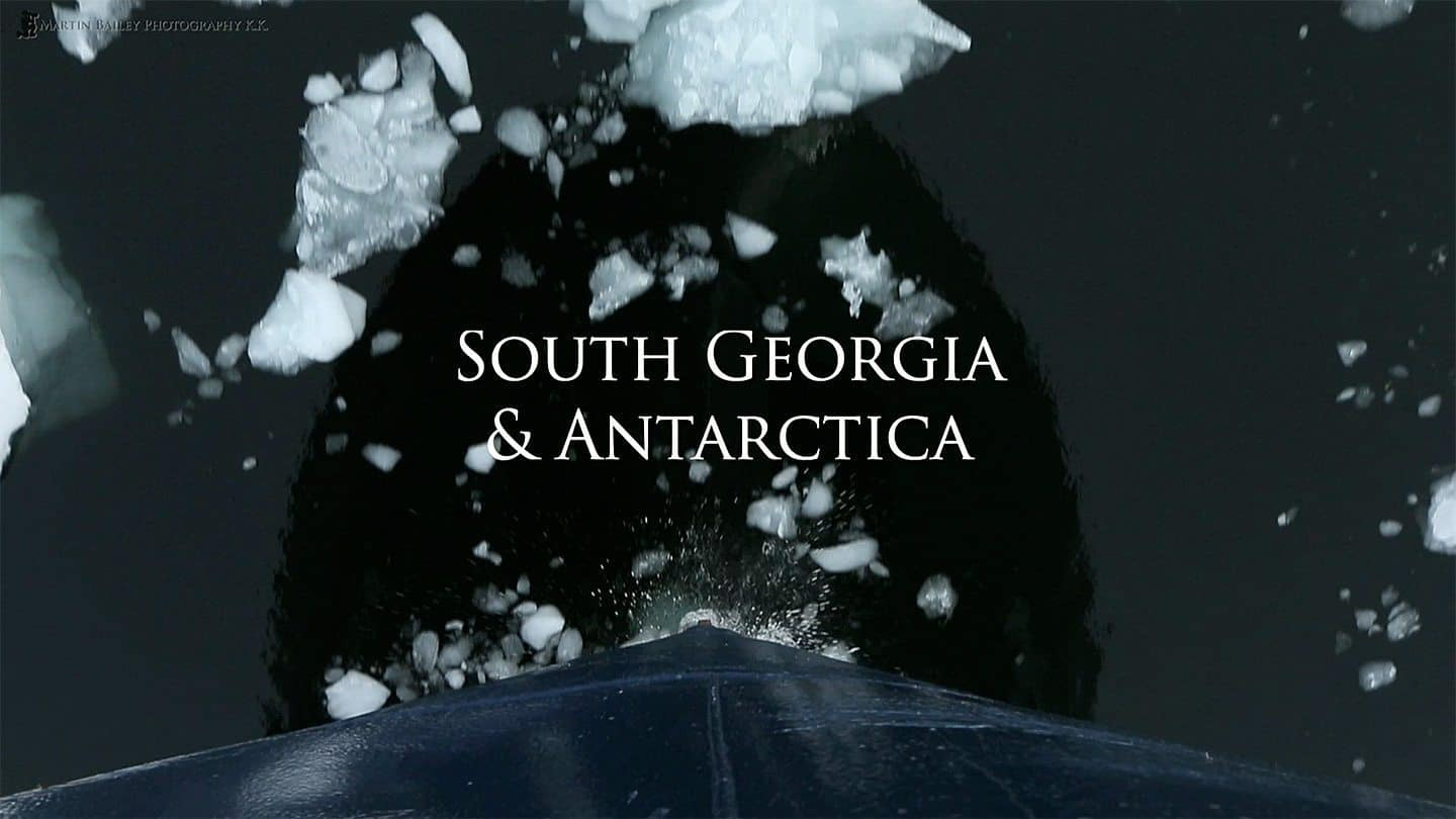 Antarctica and South Georgia Video Screenshot