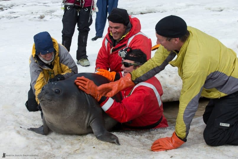 http://www.martinbaileyphotography.com/wp-content/uploads/2013/04/MBP_Antarctica_20121203_8744-805x537.jpg