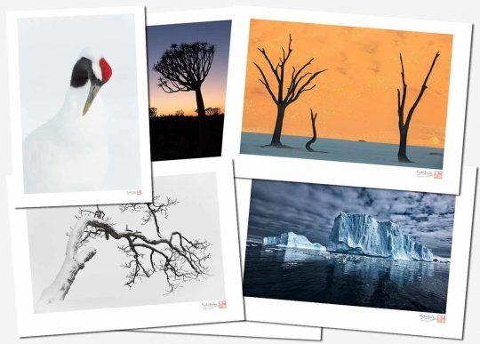 Martin Bailey Fine Art Prints