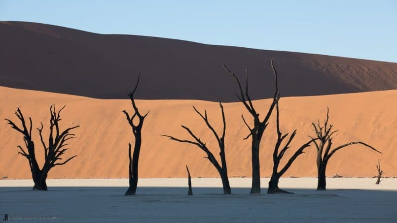 Deadvlei Camel Thorn Trees