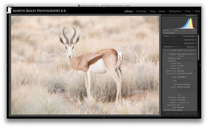 Springbok Shot in Lightroom