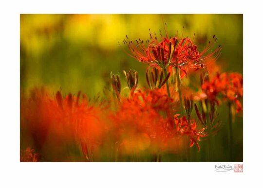 Equinox Flowers 2006