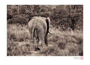 Elephant's Ass
