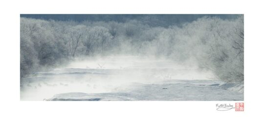 Short Flight