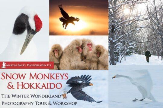 Snow Monkeys & Hokkaido Tours